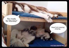 Via Free Spirit Siberian Husky Rescue