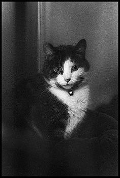 https://flic.kr/p/7ivJLJ   cat @ humane society   shot on Ilford Delta 3200@6400, developed in D-76 for 13 minutes