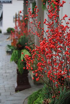 Red Ilex berries make a gorgeous addition to outdoor planters for the winter