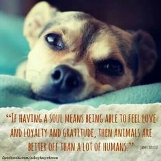 There's something so pure about the love of an animal ♥