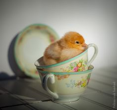 Apparently Elle is getting a chick for Easter. She is obsessed.  My aunt gave me this china.