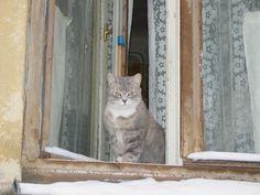 Latvian cat