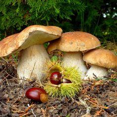 Châtaignes et champignons .. c'est bien l'Automne !