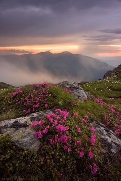 Rhododendron in Muntii Rodnei by Sergey-Ryzhkov on DeviantArt Landscape Photography, Nature Photography, Carpathian Mountains, Instagram Website, Shutter Speed, More Photos, Beautiful Landscapes, Romania, Great Places