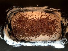 Fotorecept: Kváskový chlieb v automatickej pekárni pre každého - Tomáš Čerkala (blog.sme.sk) Tiramisu, Ethnic Recipes, Blog, Blogging, Tiramisu Cake