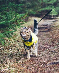 Camping With Cats, Cat Camping, Baby Animals, Cute Animals, Living With Cats, Adventure Cat, Cat Activity, Like A Cat, Dog Leash