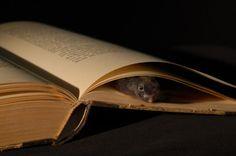 book-mouse @Danielle Velasquez