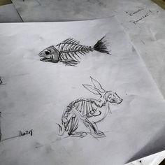 Fish and rabbit  sketches
