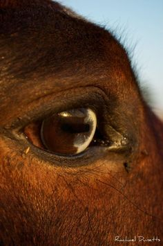 Pursuit of Happiness #horse eye #photography
