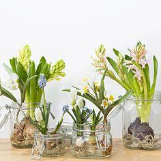 2月限定 球根と楽しむ初春の花 | 無印良品ネットストア