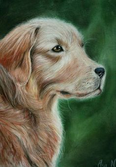 """""""Golden"""" Pastel drawing by @elsa_creative on instagram"""