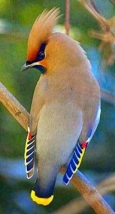 Beautiful animals   nickachu_blog Kinds Of Birds, All Birds, Cute Birds, Pretty Birds, Little Birds, Angry Birds, Flying Birds, Tropical Birds, Exotic Birds
