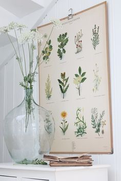 Bright light wild flowers in front of a poster of medicinal herbs. VIBEKE DESIGN: juli 2013