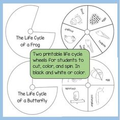 Two printable life cycle wheels (frog and butterfly), available in color or black and white.
