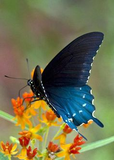 Blue Butterfly II Greeting Card by Vernis Maxwell