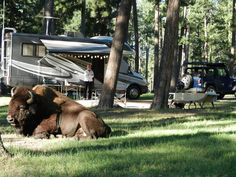 Our Trip to Mt. Rushmore – Blue Bell Campground, Custer State Park