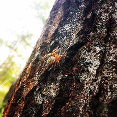 【nana_slept】さんのInstagramをピンしています。 《蜘蛛の糸まで綺麗にうつってる 🕷🕸 ウクライナでBBQしたとき 😉🍖🔥 #nature #pic #bbq #fun #spiderwebs  #spider #wood #forest #自然 #蜘蛛 #くも #綺麗 #森 #虫 #🕷 #🕸 #夕方 #ua #ukraine #природа #паук #паутина  #дерево #лес #instagood  #写真好きな人と繋がりたい  #写真撮ってる人と繋がりたい  #ファインダー越しの私の世界》
