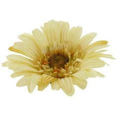 """Brighten your day with this rich cream Gerbera Stem mixed in a flower arrangement or a single stem in a vase.   The daisy is 4 1/2"""" in diameter, the 21"""" stem is leafless with a furry texture."""