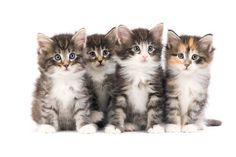 [BLOG] A breeder's guide of kitten diarrhea - Royal Canin Canada Elite Breeders' Club