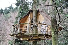 casa del árbol en el bosque para adultos