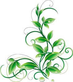 Floral Green Leaves And Water Droplets PNG Clipart - iCliparts.com