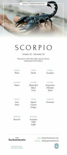 Scorpio Zodiac Sign Correspondences - Scorpio Personality, Scorpio Symbol, Scorpio Mythology and Scorpio Meaning - Scorpio - Tattoo MAG Scorpio Symbol, Scorpio Zodiac Facts, Astrology Scorpio, Scorpio Traits, Scorpio Love, Scorpio Woman, Astrology Signs, Scorpio Quotes, Scorpio And Cancer