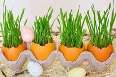 Secretele unei recolte bogate de castraveți! - Retete Usoare Easter Crafts, Easter Decor, Diy, Decorations, Youtube, Plant, Bricolage, Dekoration, Do It Yourself