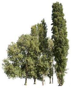 Trees group I