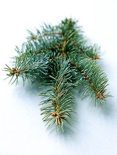 Colorado Blue Spruce   This tree has stiff, sharp needles that are dense, light bluish-gray to dark green, and 1 to 1-1/2 inches long. It holds decorations well and has fair needle retention, symmetrical form and unique color.