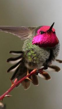 hummingbird - [Thanks to Pinterest user Barbara Hughes who previously pinned this to my more generic board about birds.]