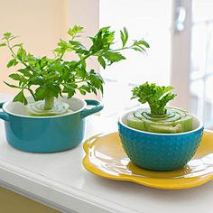 """No matter what time of year it is, there are times when we want to bring the beauty and gifts from the garden indoors. Whether it's to keep your """"green thumb"""" warm during the winter... Read More"""