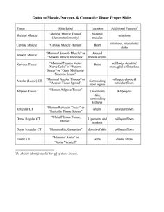 Anatomy and Physiology Muscle Worksheets body muscles