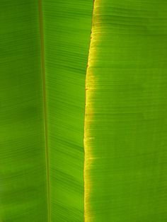 An Indian woman gets innovative and sources fresh banana leaves from her Indian store for this stunning baby shower backdrop!