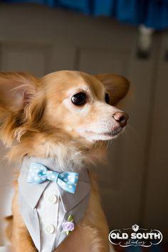 Tuxedo Bandana Gray Wedding Suit Sz XS S M by happydapperdogs, $14.99