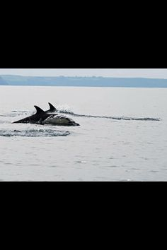 Did you know that it is very likely that you'll see Dolphins on our North Cornish Coastline :)