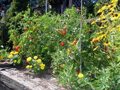 tomato-gardenHave you really thought about what helps you to grow? - Lee Johndrow