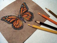 Draw & Paint Monarch Butterflies  