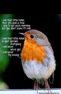 That little Robin.always by my side ❤️ Stay with me Robbie ❤️<br> Loss Quotes, Dad Quotes, Animals And Pets, Cute Animals, Loved One In Heaven, Robin Redbreast, Miss You Dad, Grieving Quotes, Robin Bird