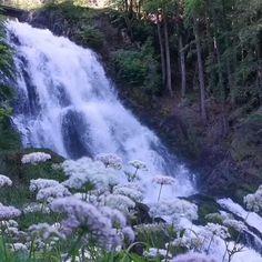 Tanke dich mit Kraft und Energie auf  ✳️indem du deine Einstellung änderst  ✳️indem du in die Natur gehst   ✳️indem du meditierst  ✳️indem du...    ➡️ Was machst du um deine Kraft zu aktivieren?   Ich habe mich gestern frühmorgens neben dem tosenden Giessbach Wasserfall gesetzt. Das ist ein wundervoller Ort um Kraft zu tanken. River, Places, Nature, Outdoor, Beauty, Wonderful Places, Waterfall, Switzerland, Outdoors