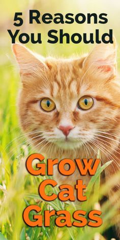 Here are five reasons why it's good to give your cat access to nature's best…