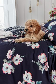 Joules Painted Poppies puppy lifestyle