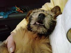 Happy National Dog Day! Today's Disney Magic Pinterest