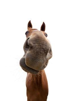 #horselover #horse