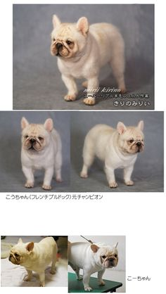 Needle felted French Bulldog by Kirino Mirii of Japan