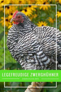 2x Miniatur Keramik Huhn Hühner Henne Bauernhof Hühnerhof Deko Osterdeko Ostern