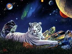 mystic creature tiger animal picture and wallpaper