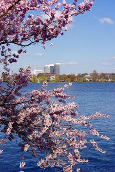 Die Kirschblüte an der Außenalster in Hamburg und weitere schöne Fotos von der Perle an der Elbe.