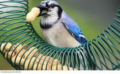 Comedero para aves silvestres.