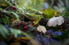 """Autumn details by Helena Normark"