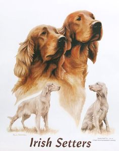 Irish Setter Dogs Images T Shirts  100% Cotton Women's New Style and Cut Tee Size M L XL 2XL Free Shipping